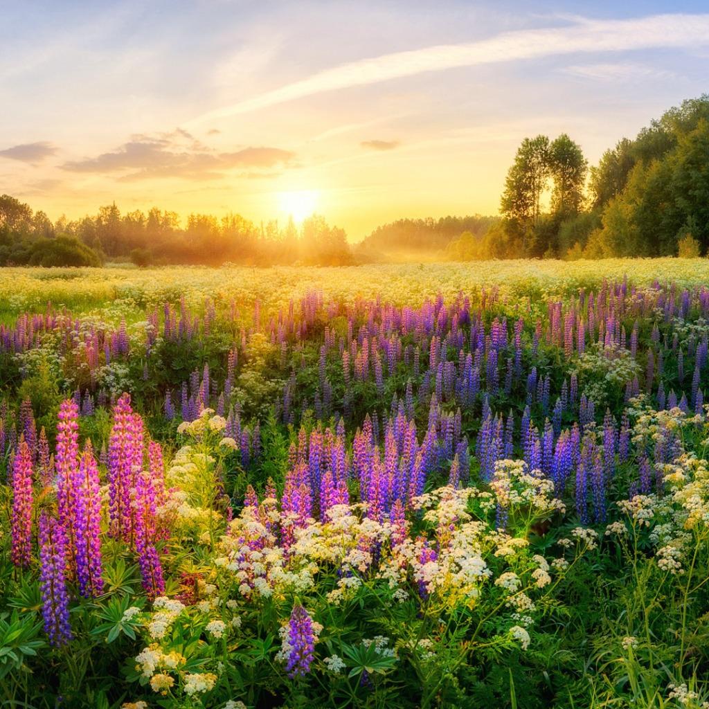 Солнце лето цветы