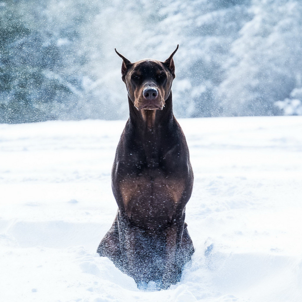сао собака фото на заставку