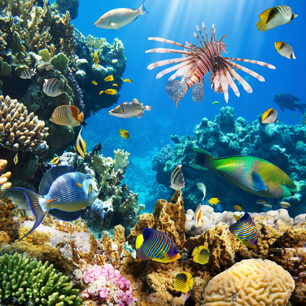 вам подводный мир картинки большого размера сразу нашла литературе