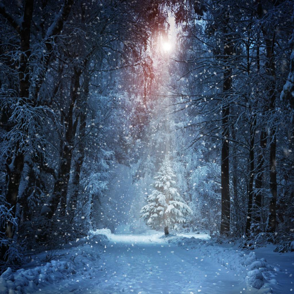Луч солнца елка скачать.
