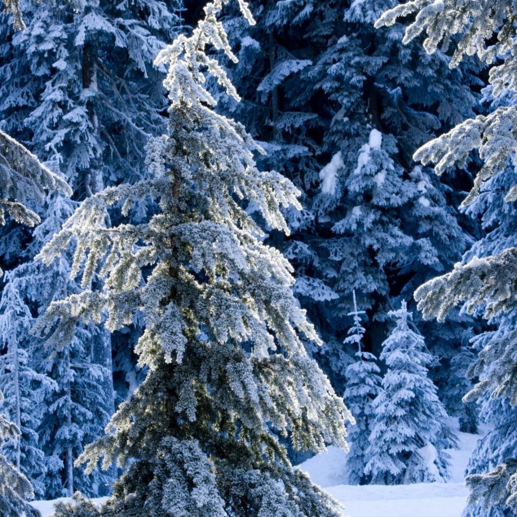 зимний лес фото на телефон постараюсь