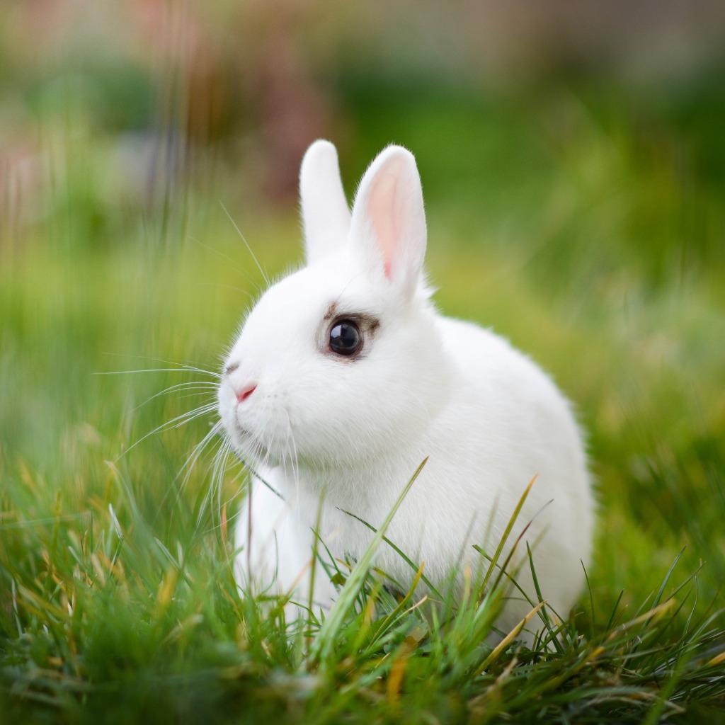 Белые кролики