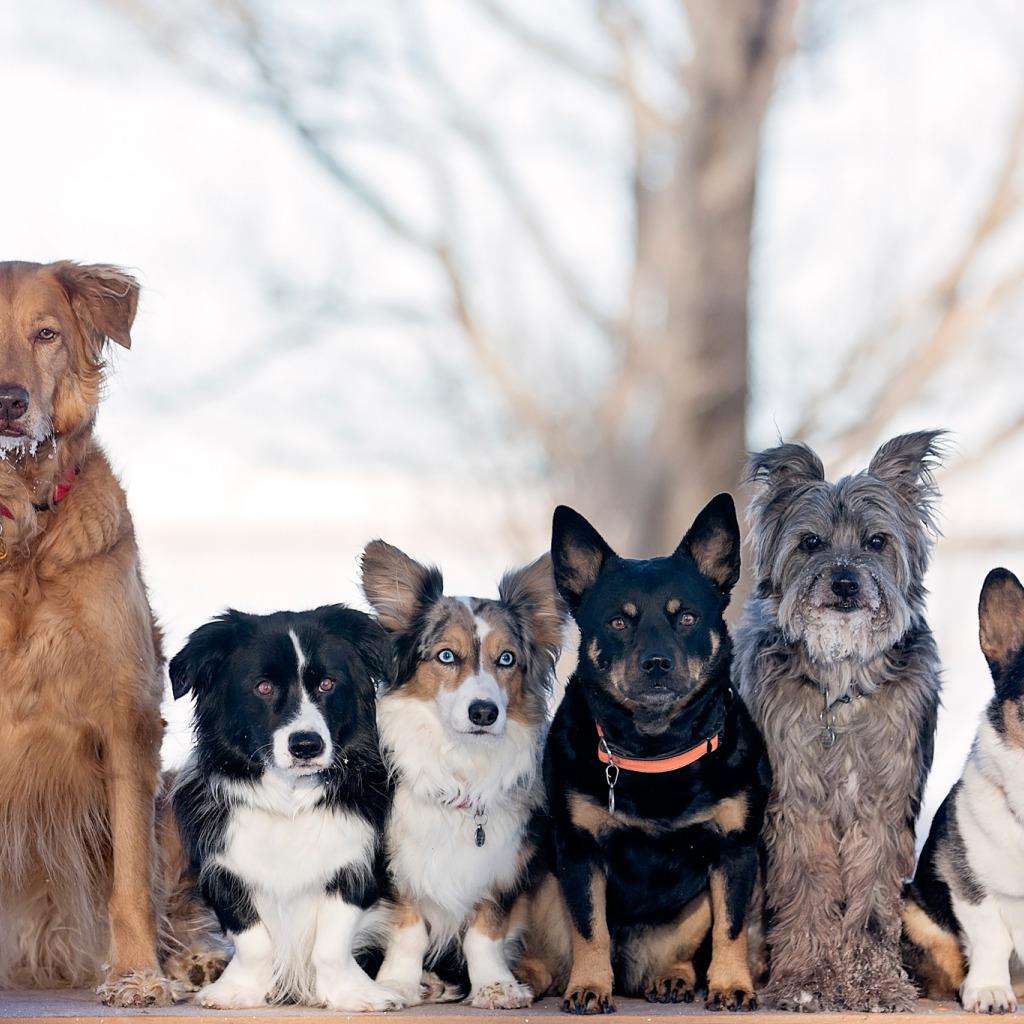 картинки собак разных пород вместе