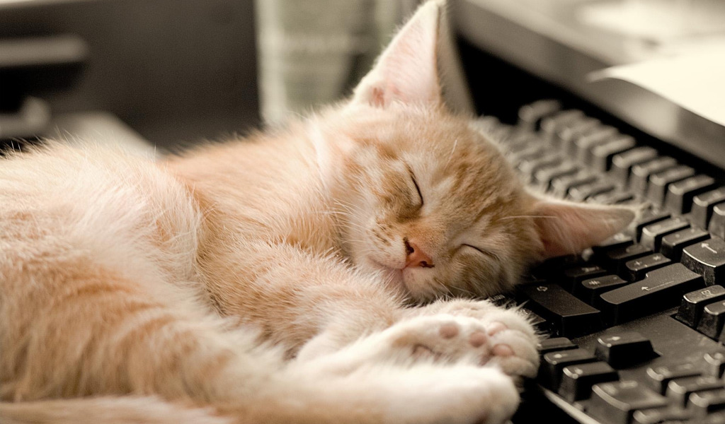 Прикольные картинки с котами для рабочего стола