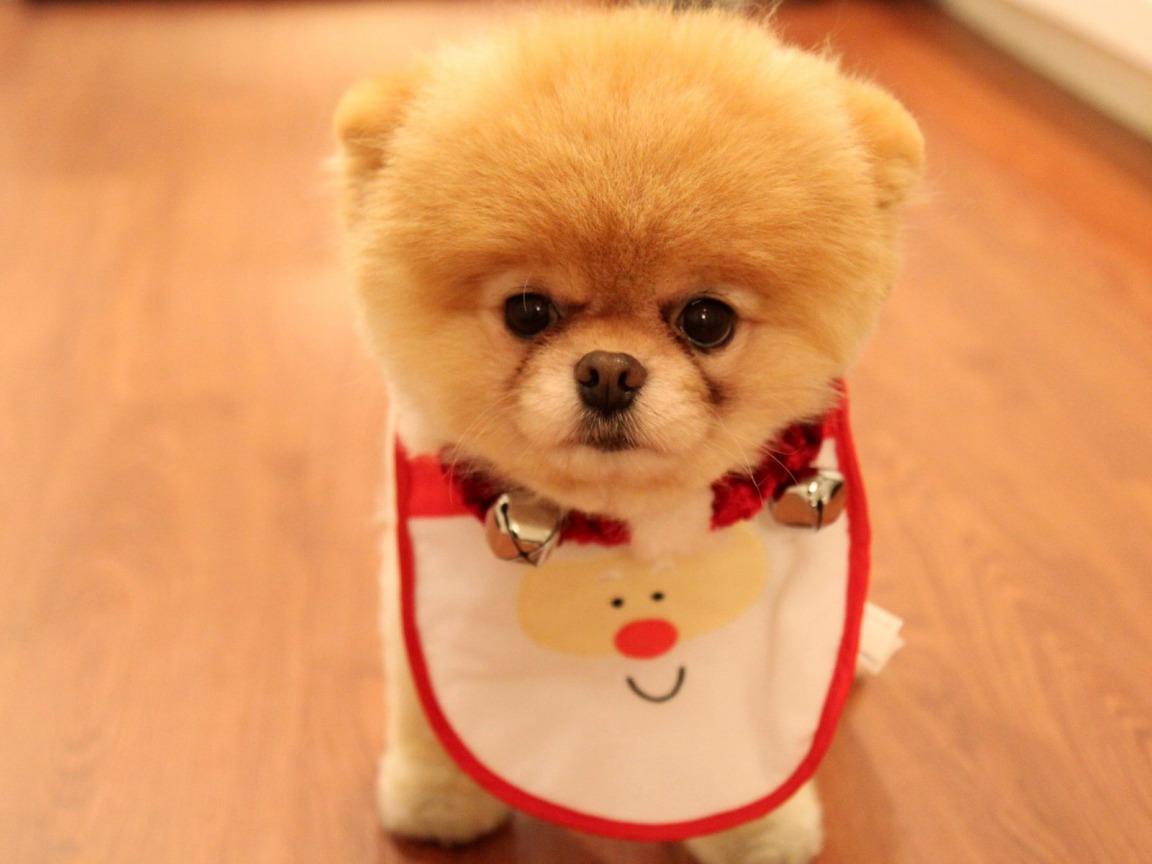 Днем рождения, картинка самой милой собаки