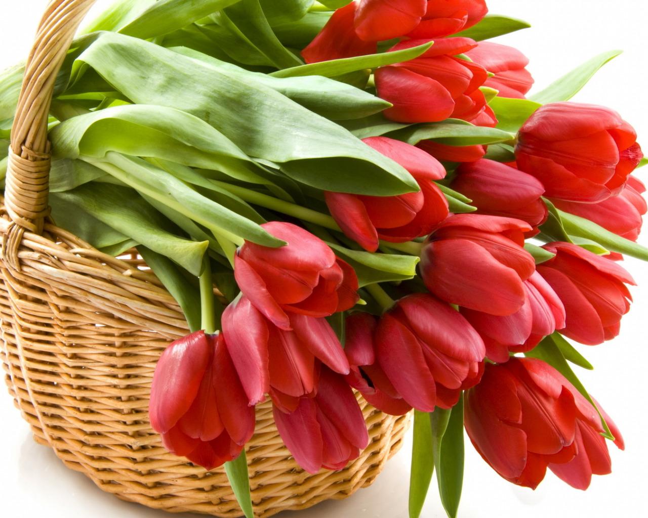Открытки с красными тюльпанами, ноября прикольные