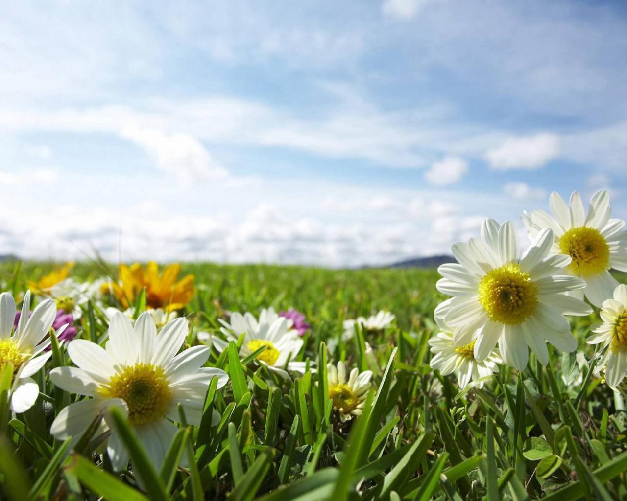 именно фото лето цветы и солнце эта разница тем
