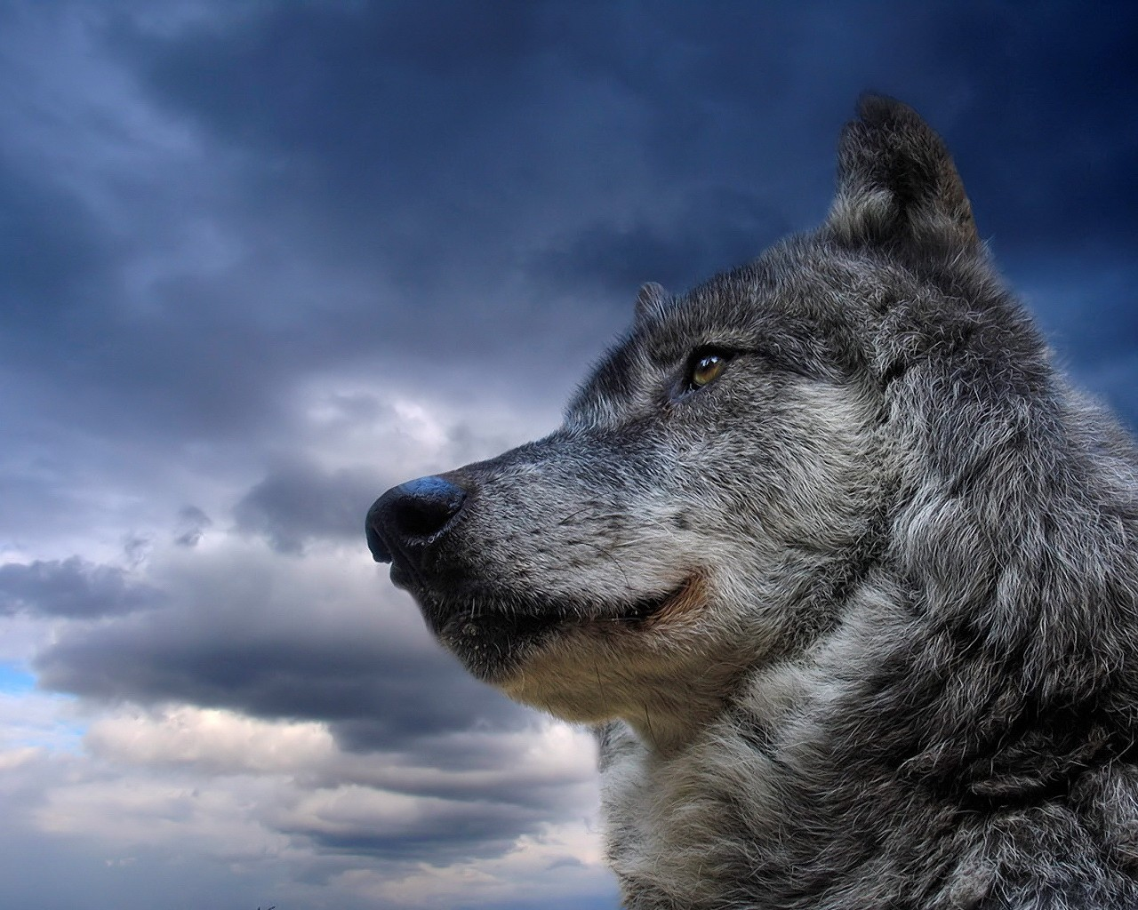Картинка волков с надписью