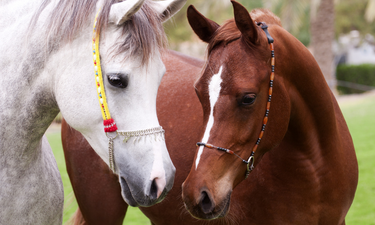 Смотреть бесплатно толкование снов онлайн, узнать что значит видеть во сне конь - сонник дома солнца.