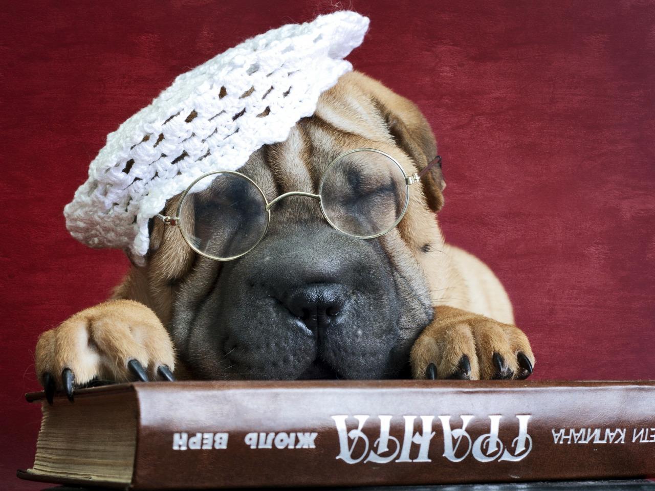 Открытку онлайн, картинка с днем рождения с собакой в очках