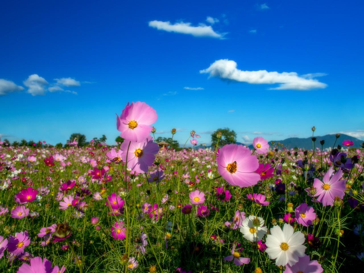 Фото цветов и неба