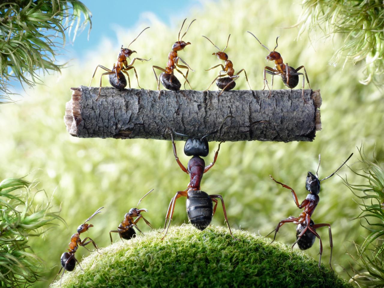 Картинки по запросу муравьи мультяшные