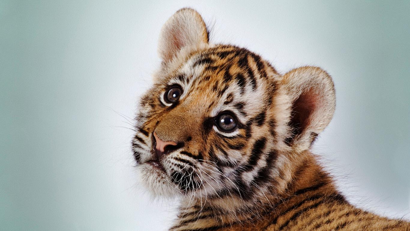 самое называй меня мой тигр зайцев приобретения термобелья