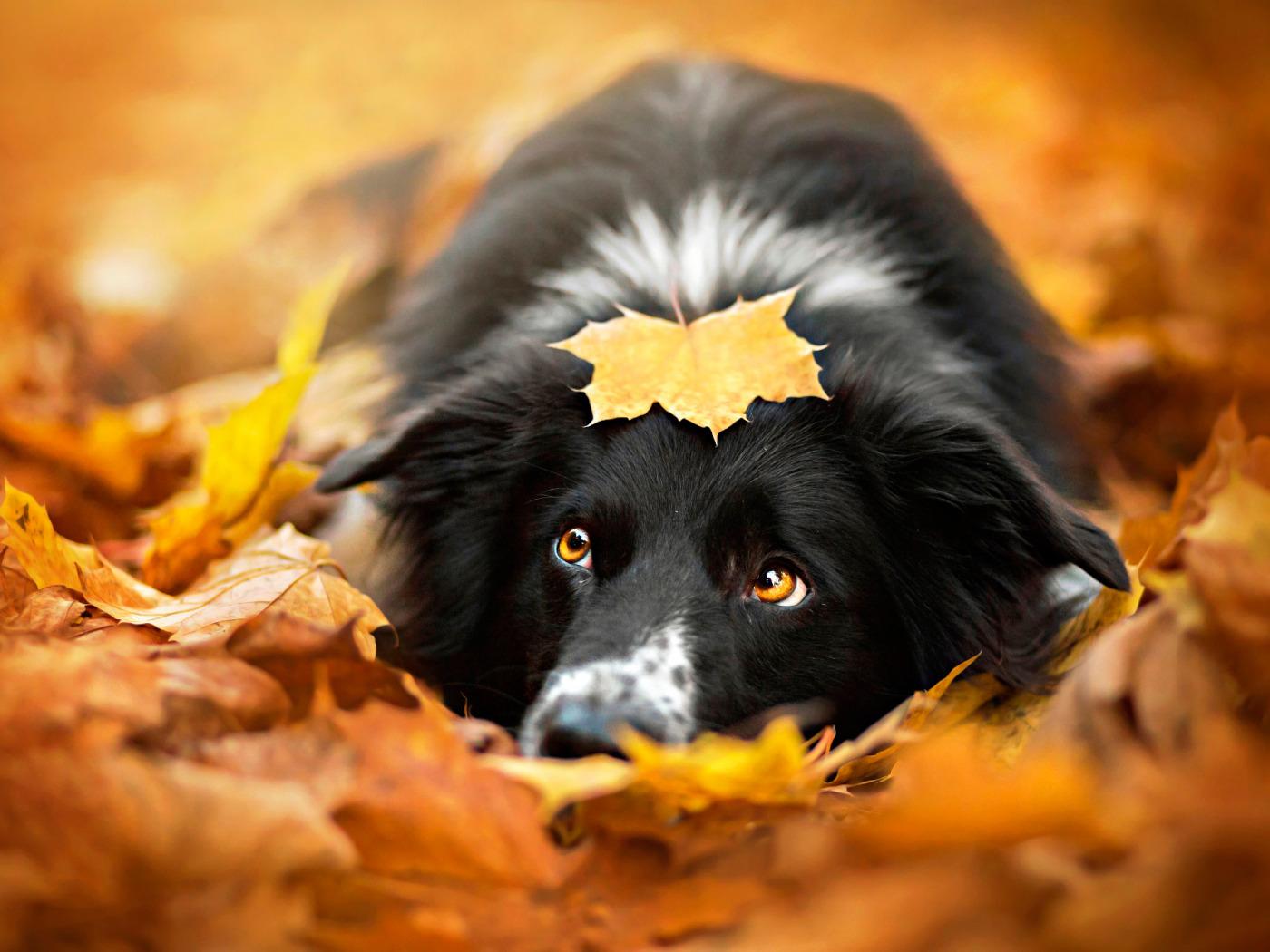 Собаки осень картинки
