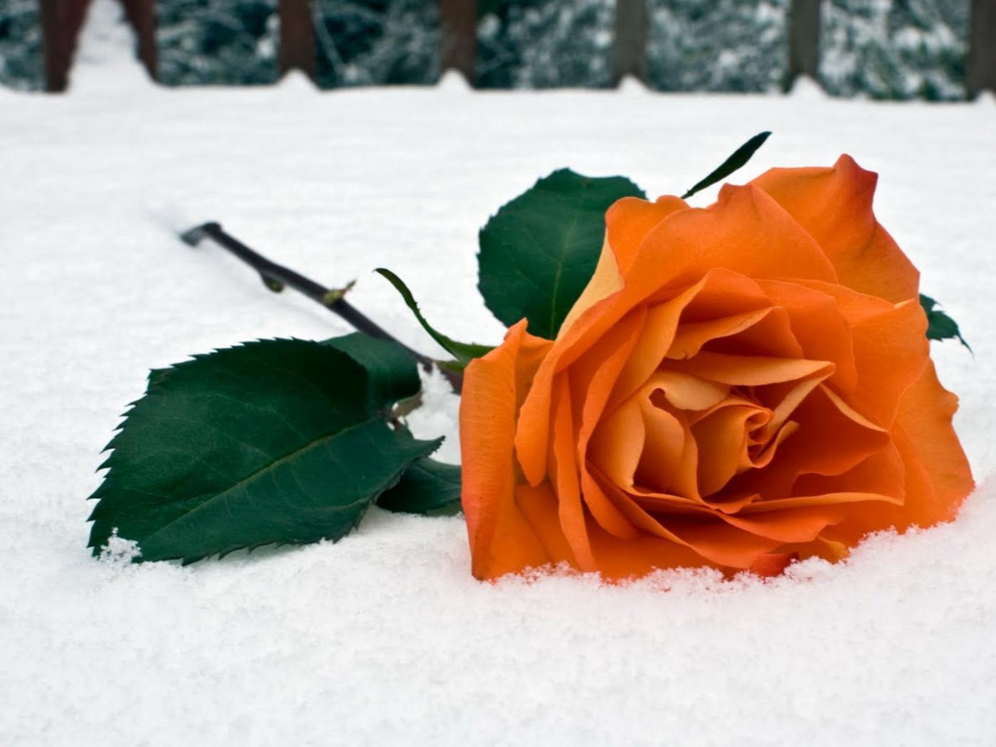 Открытки цветов зимних, спасибо господи все