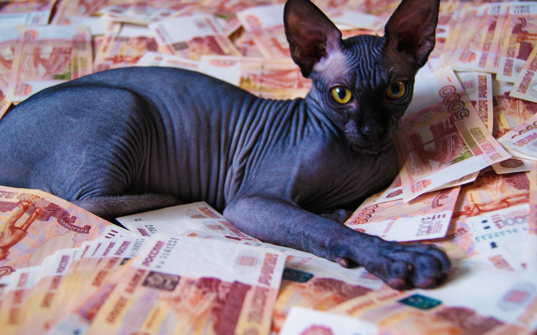 Лысый кот лежит на деньгах