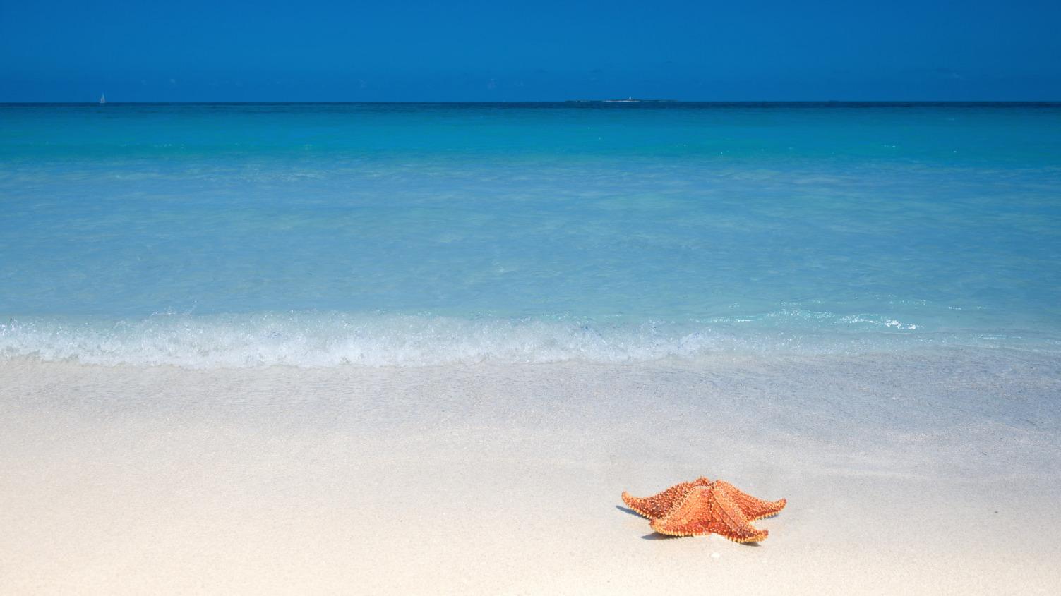 природа горизонт море морская звезда  № 623085 без смс