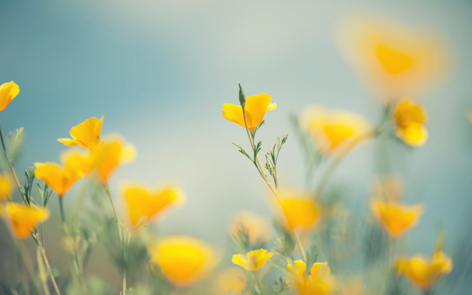 Картинки с желтыми цветами, поздравлениями сестре прикольные