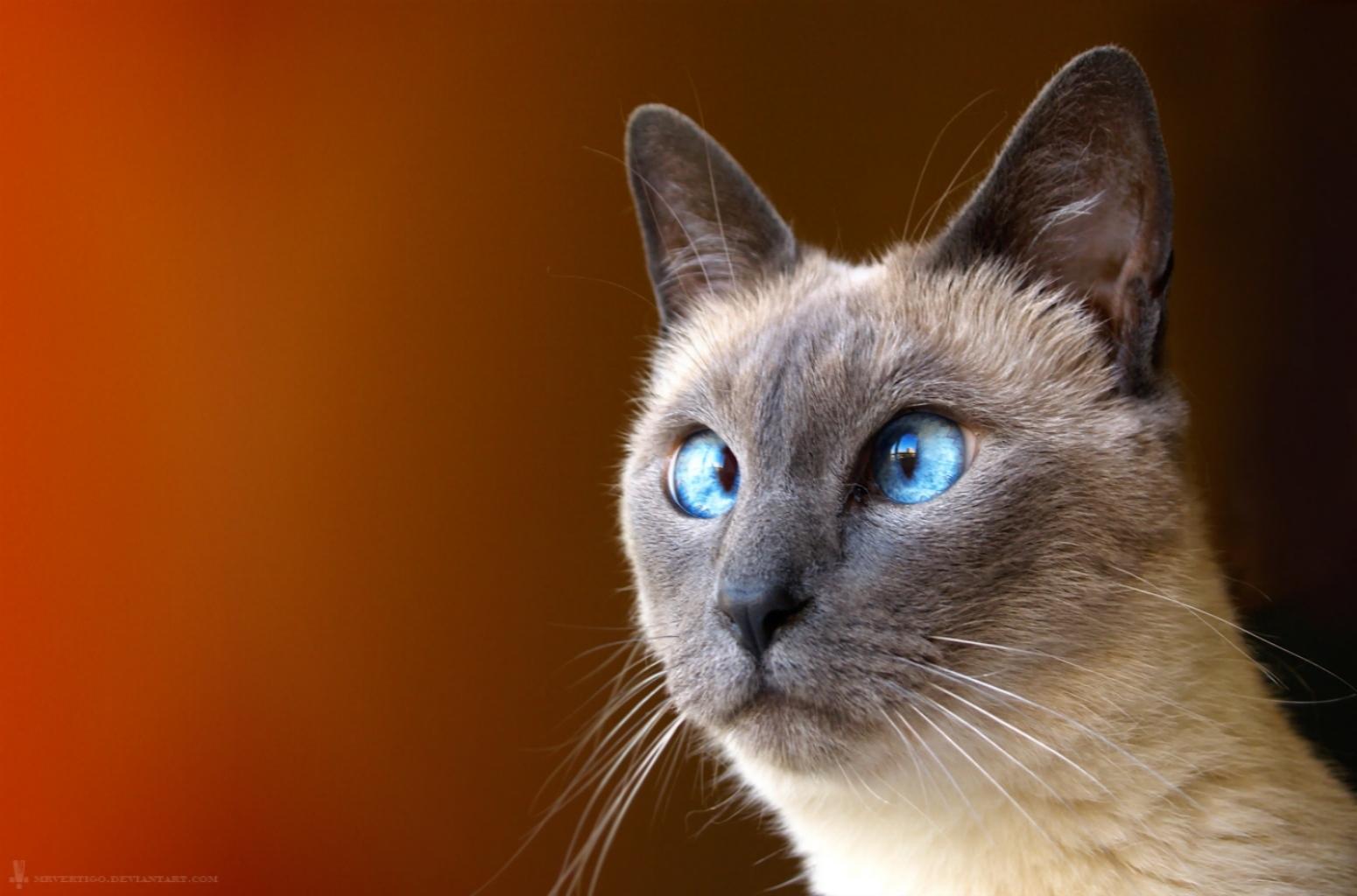 Картинки для рабочего стола прикольные кошки