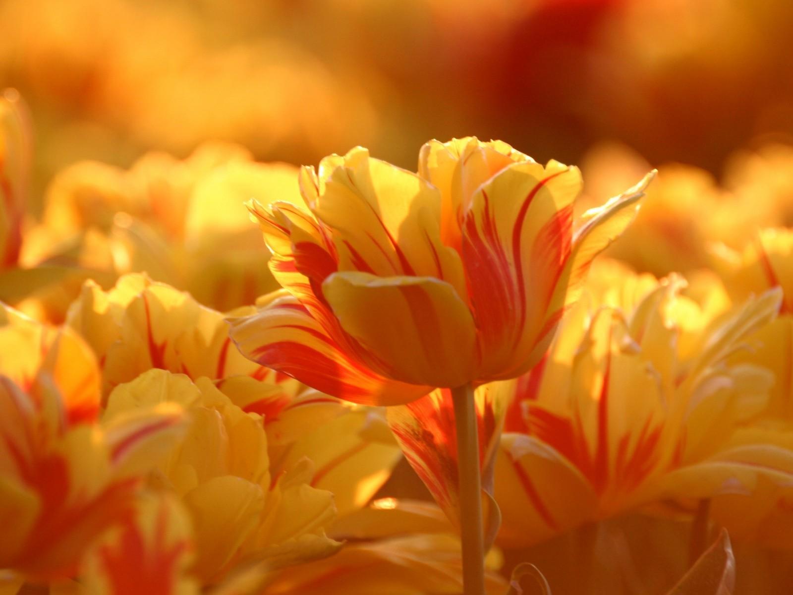 Картинки в желто-оранжевом цвете