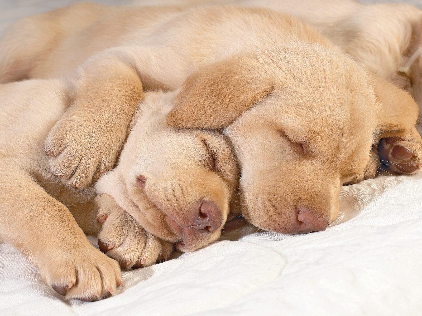 Гиф, картинки с щенками спокойной ночи
