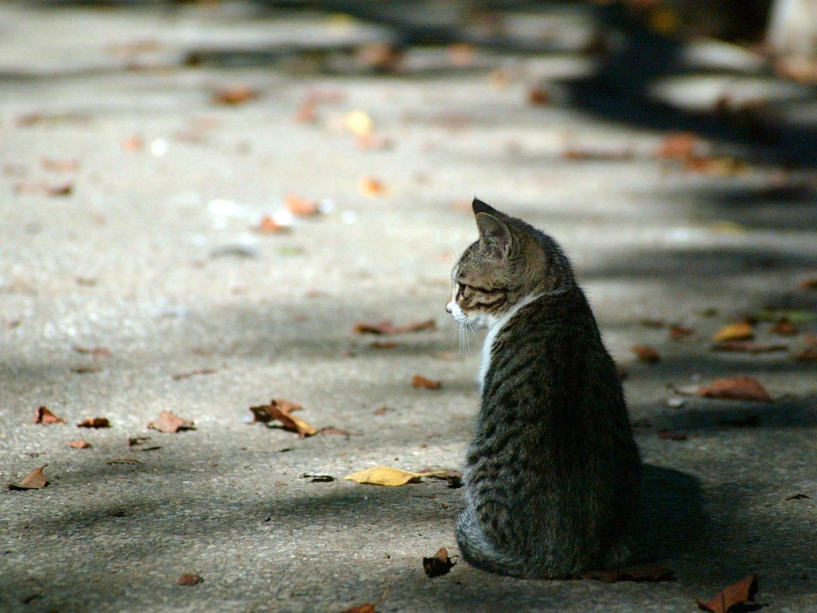 все фото грустной кошки необычность бросалась глаза