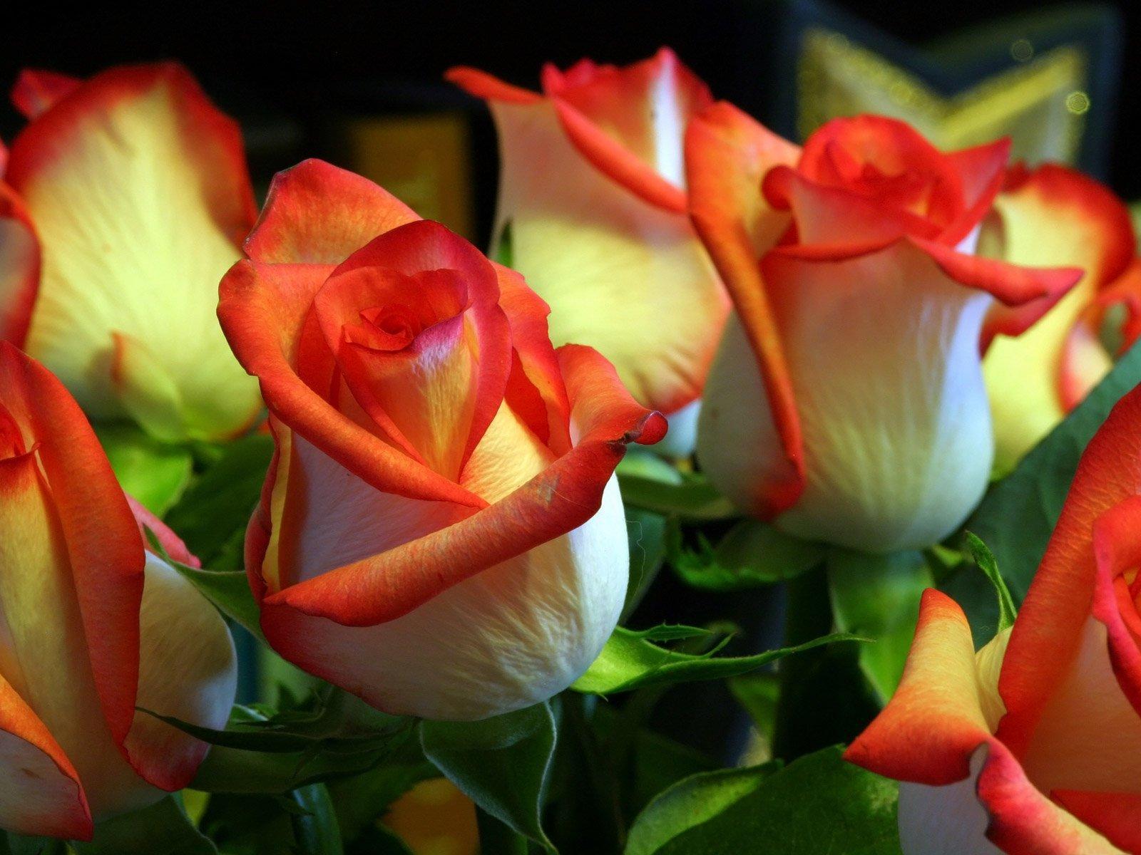 Открытки цветы смотреть онлайн, прикольные мужчине
