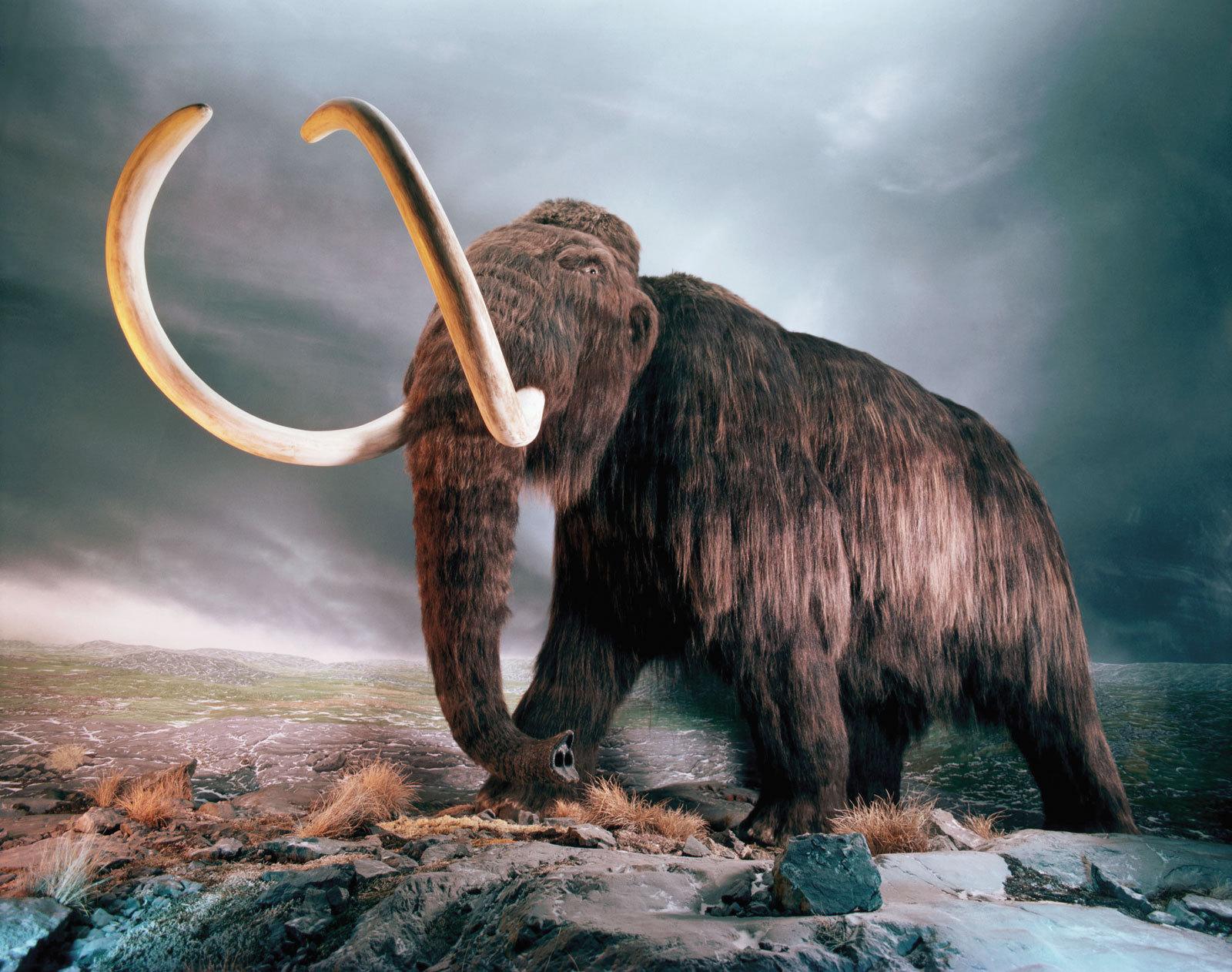 доисторические животные смотреть картинки продукт кавказе любят