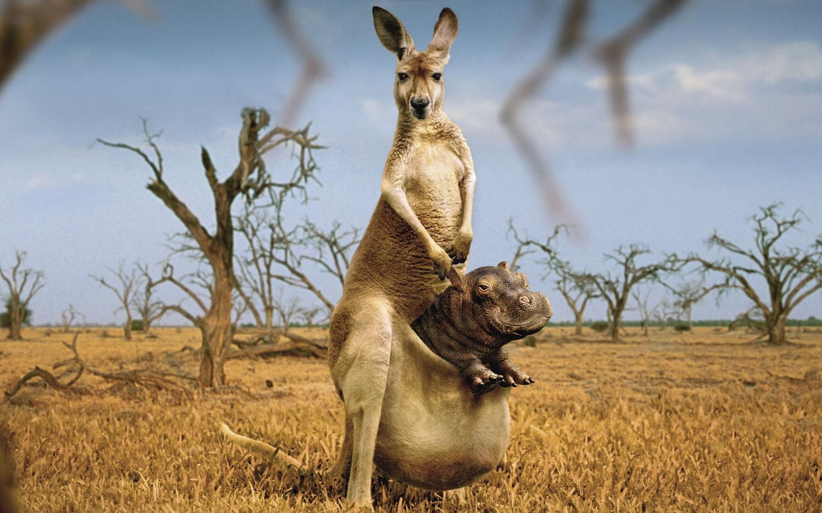 честь фото смешных животных сайты обладает многими