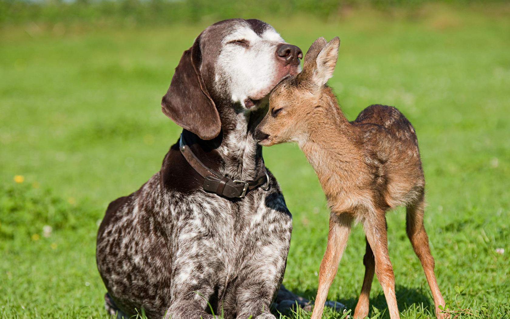Посмотреть картинки разных животных