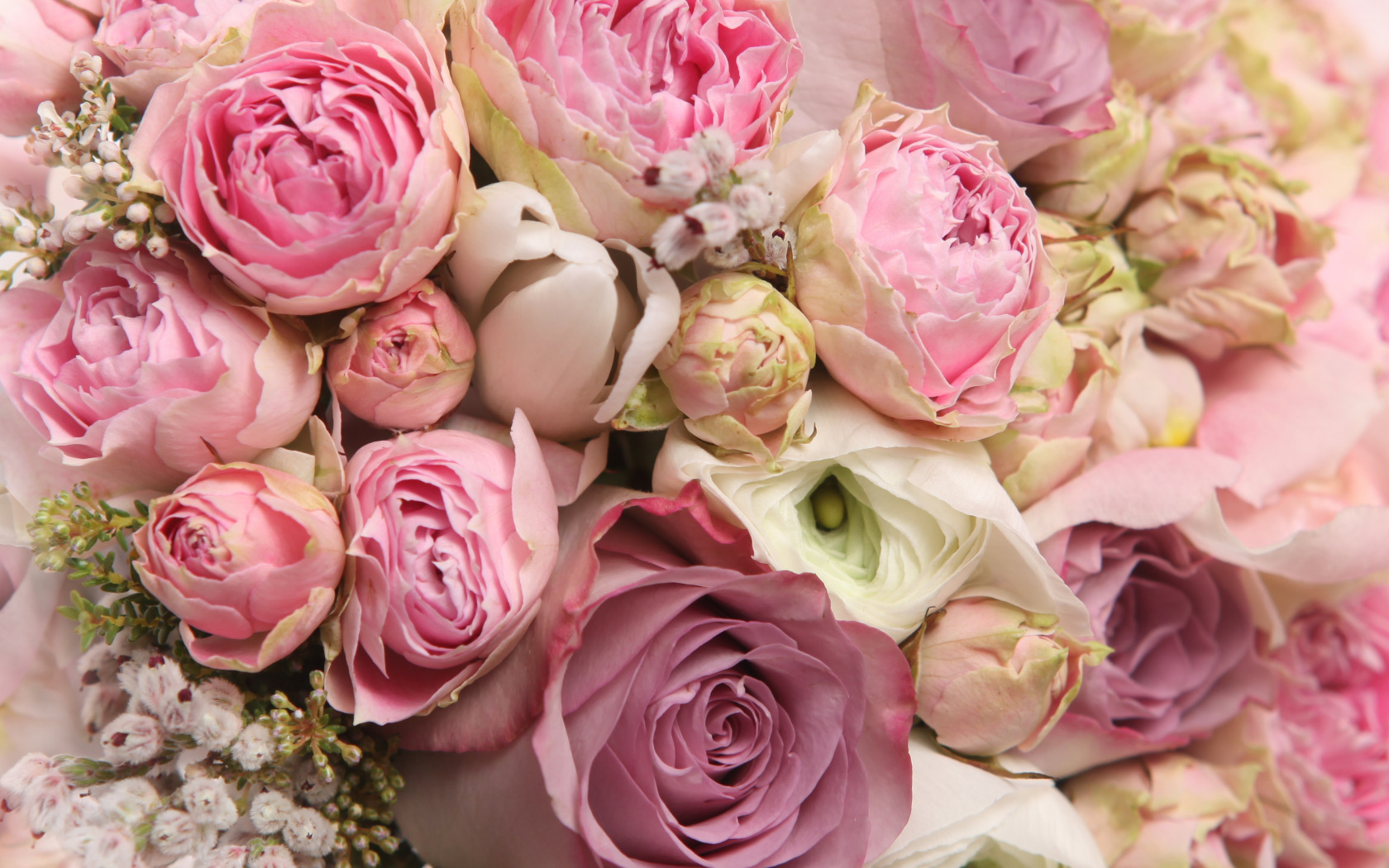 Заказ своими, открытка с днем рождения женщине пионовидные розы с пожеланиями