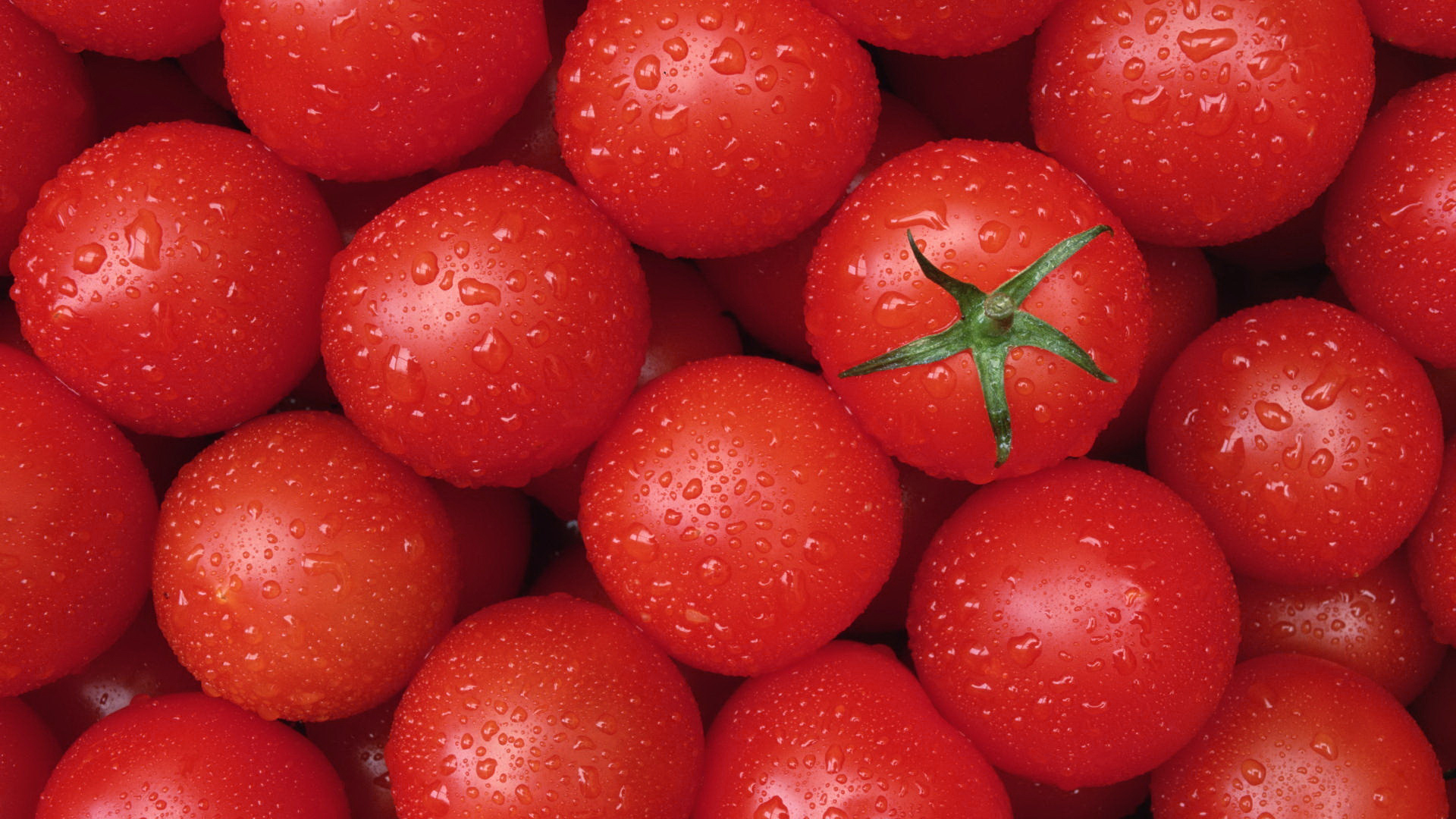 информационная картинки помидоров растение для рабочего стола того