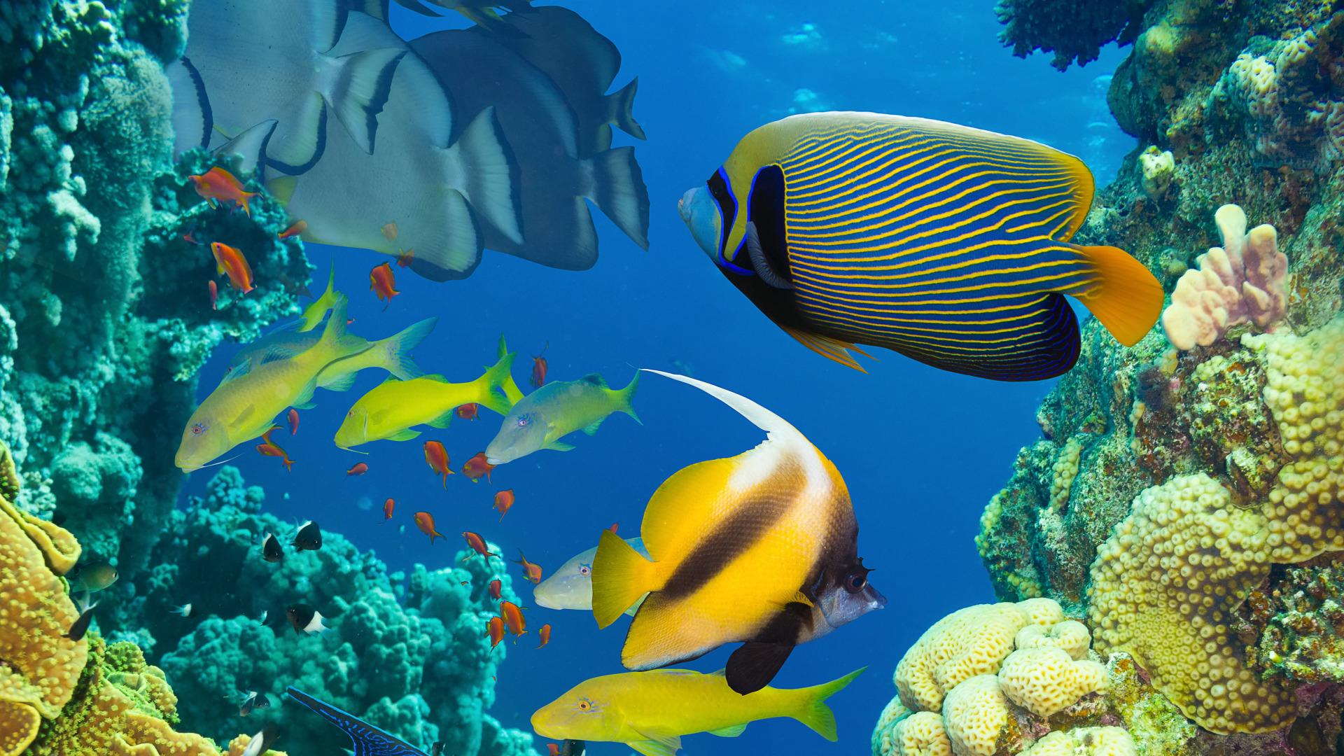 рыбы в воде картинки брюнетка