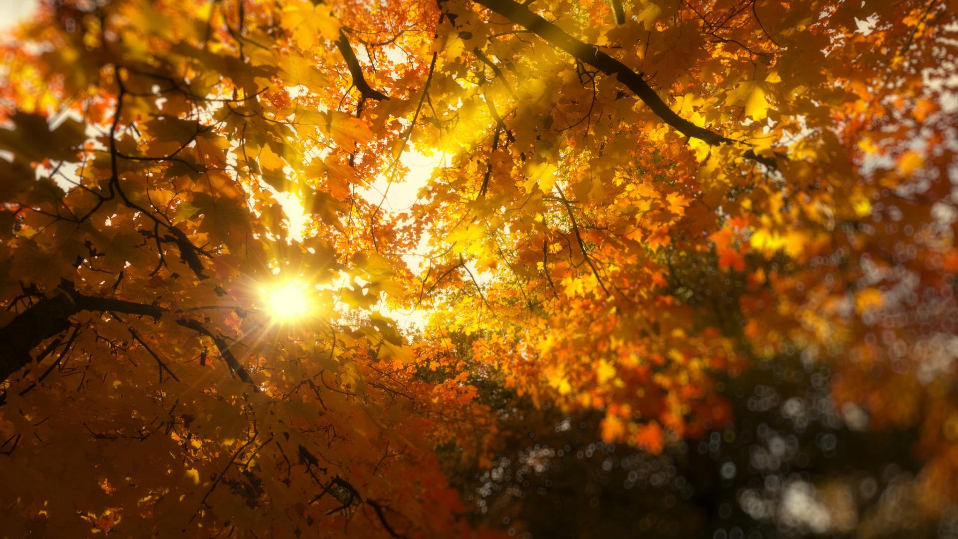 картинки осенний парк и солнечные лучи уже выше говорилось