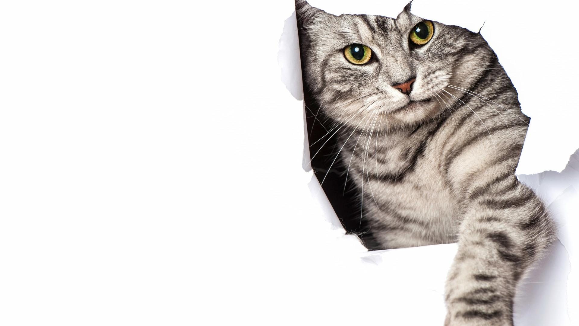 how do i get rid of cat urine smell