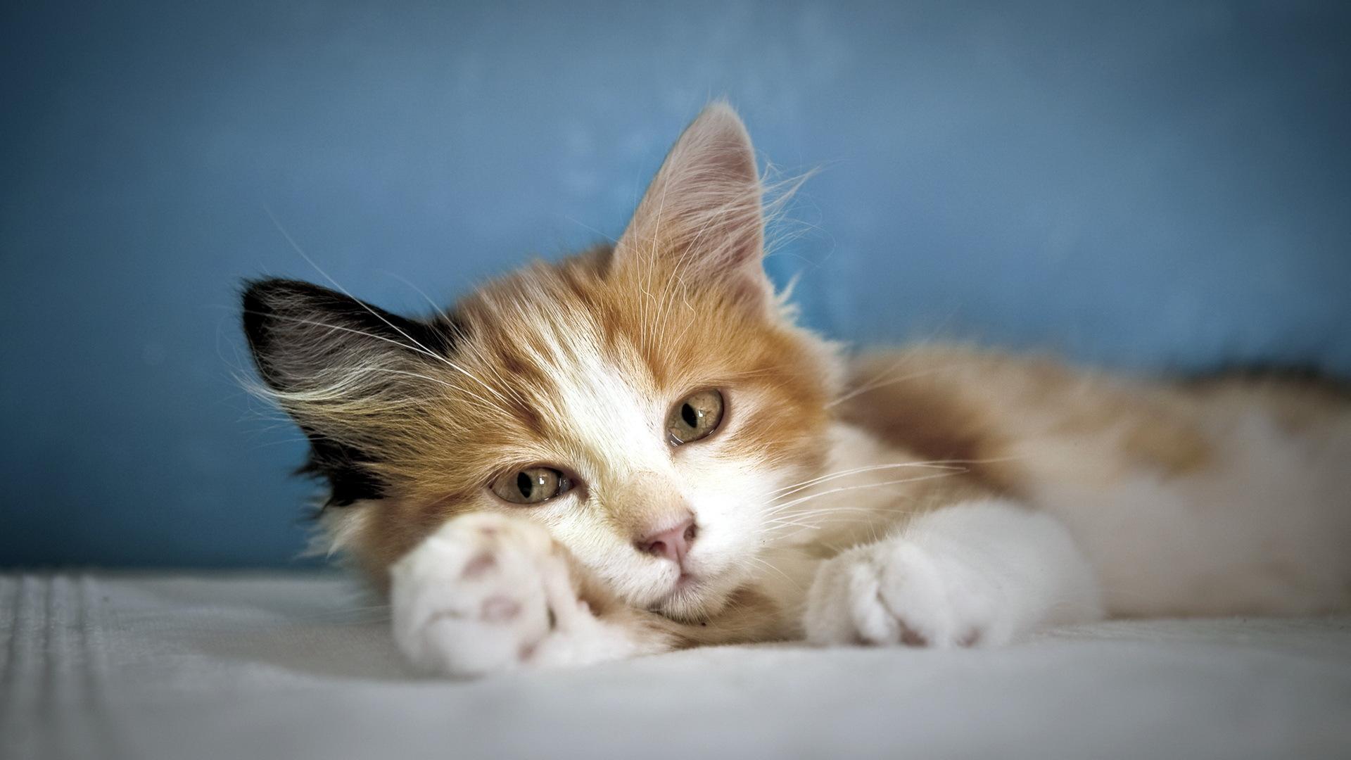Лежащий кот  № 176249  скачать