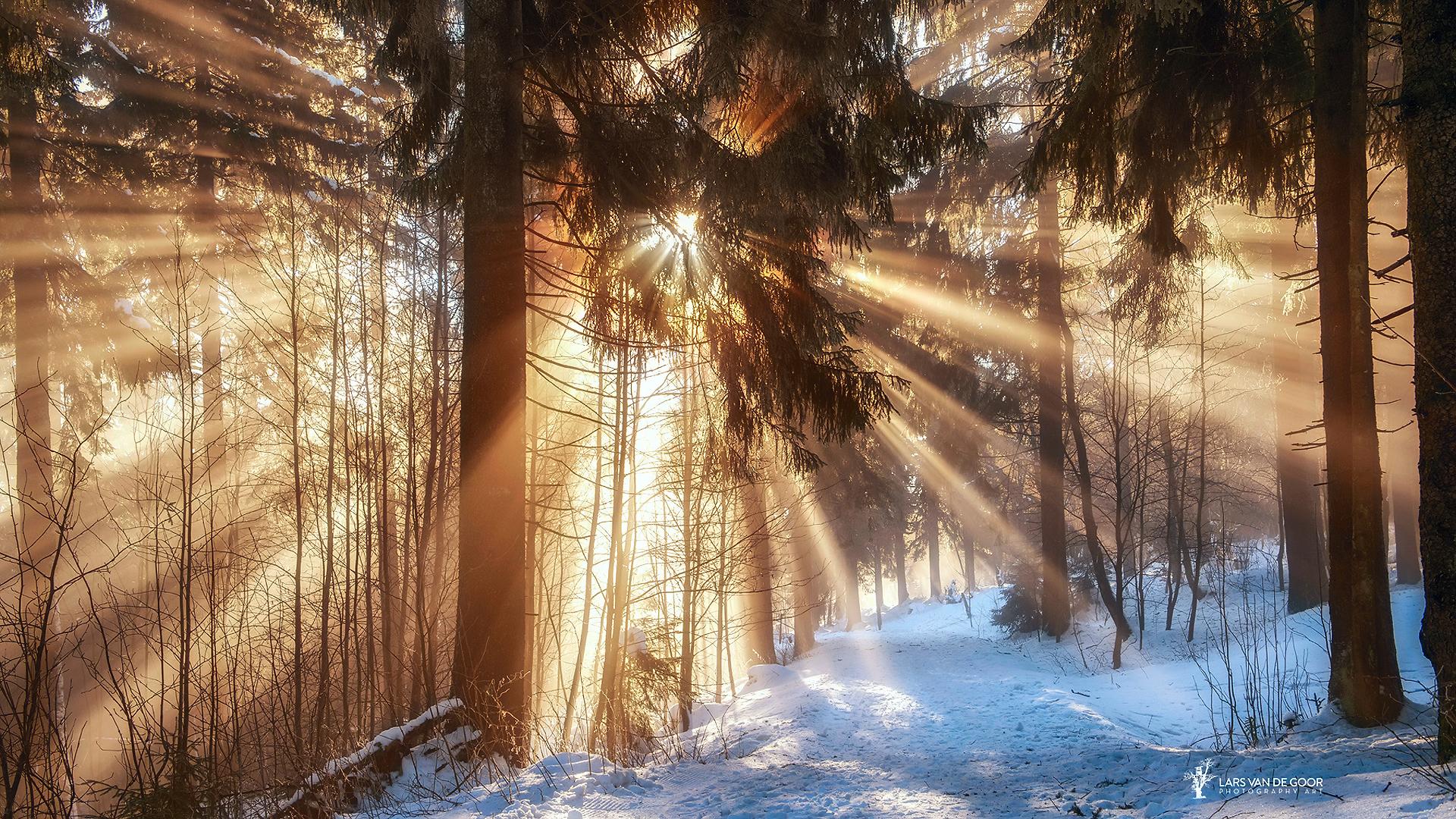 атмосфере лес в снегу под солнцем фото цилиндрической формы