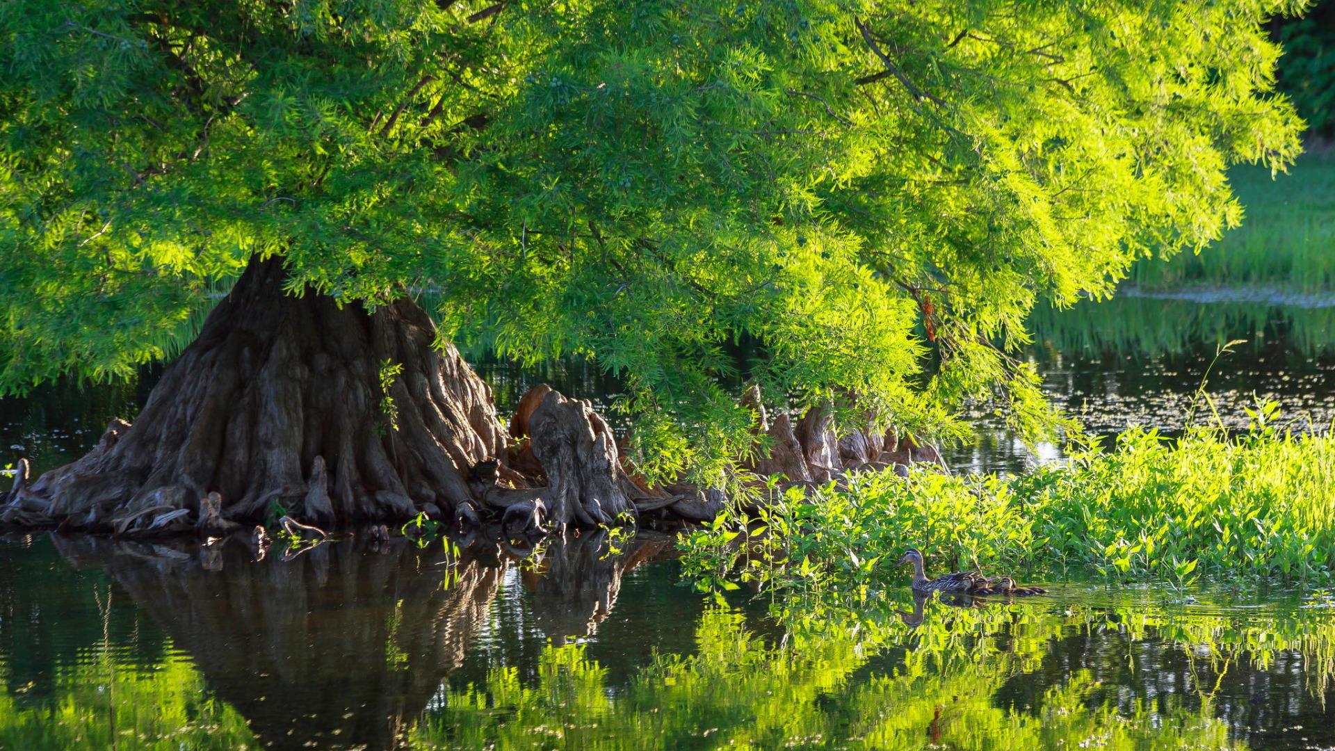 фото деревьев у пруда карандашом навес стиле