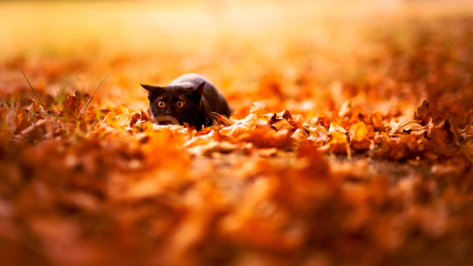 Обои на раб стол животные осенью