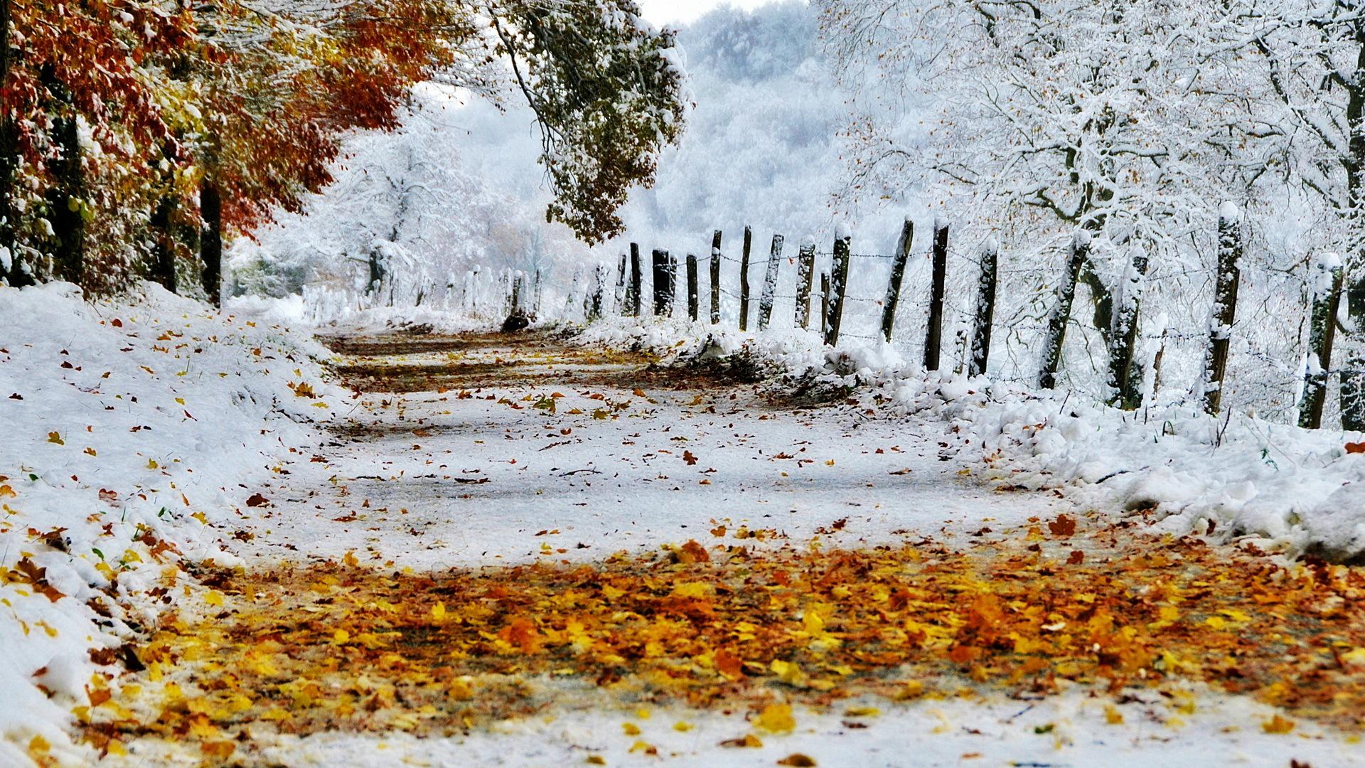 Должность, картинки первого снега на рабочий стол