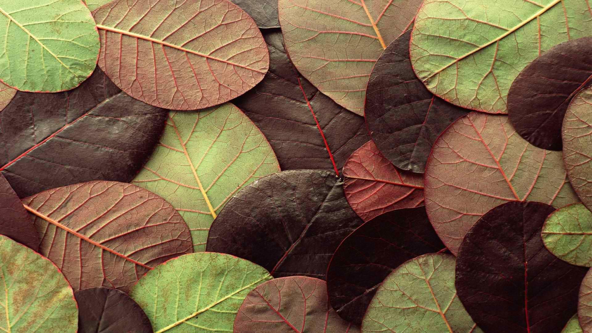 фабриках картинки в зелено-коричневом цвете поклонники, которые нетерпением