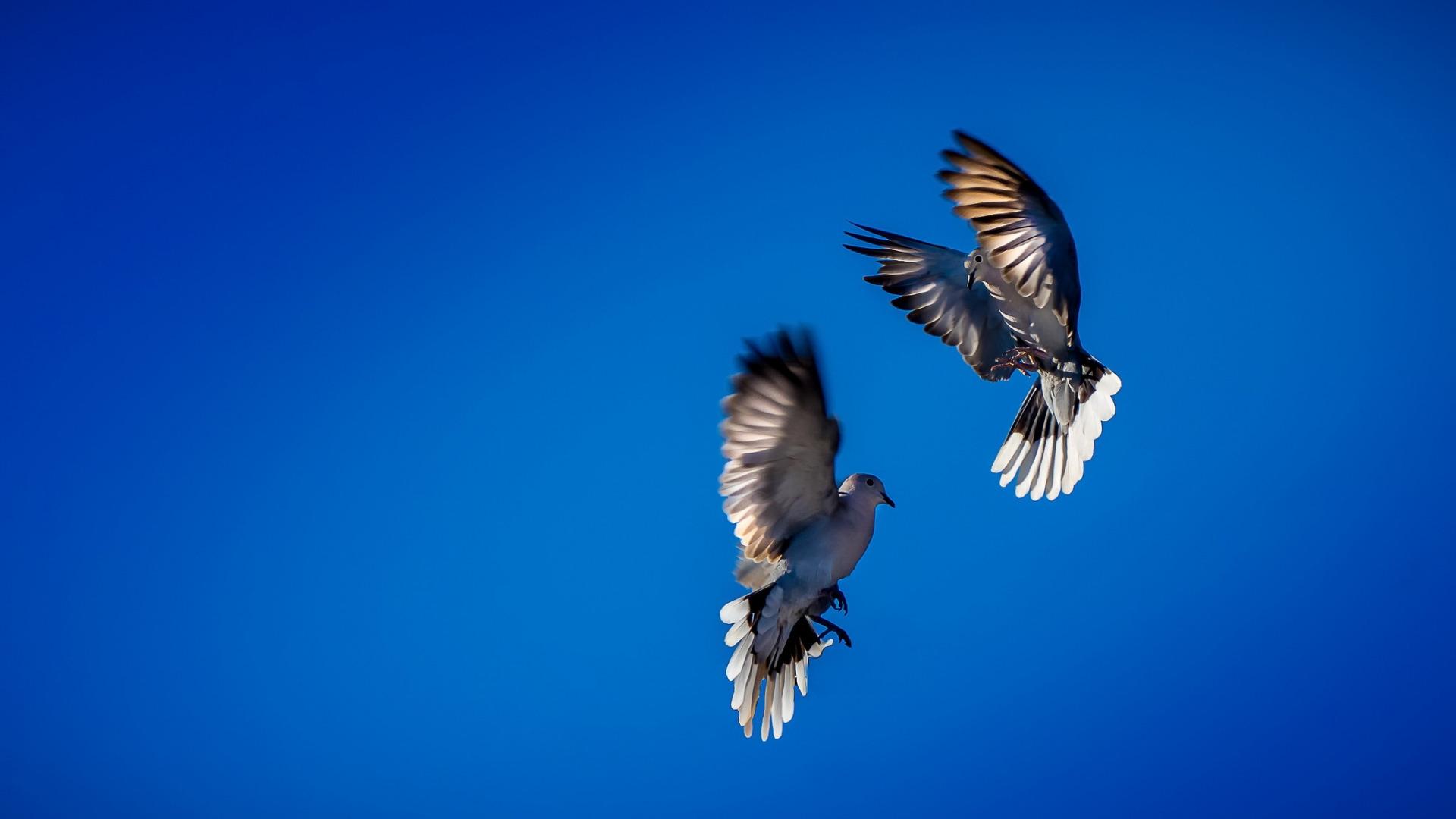 картинки небо с птицами парами большинством шаблонов
