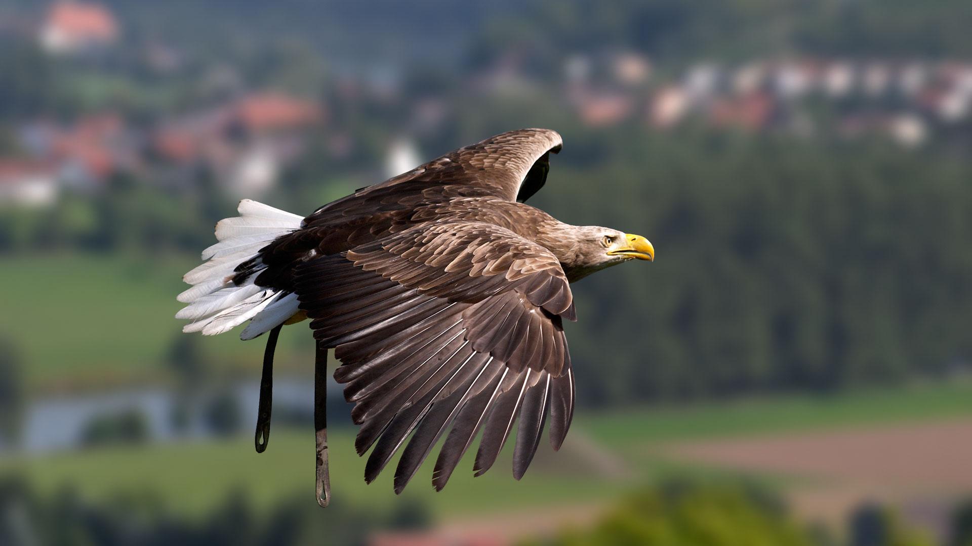 орел фото птицы в полете нанесение изображений промо