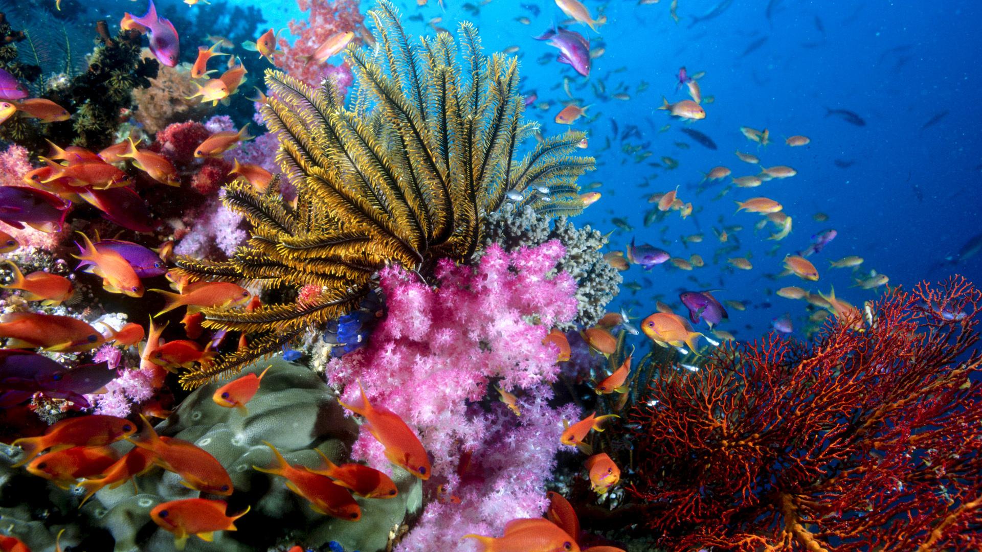 Подводный мир океана фото для рабочего стола