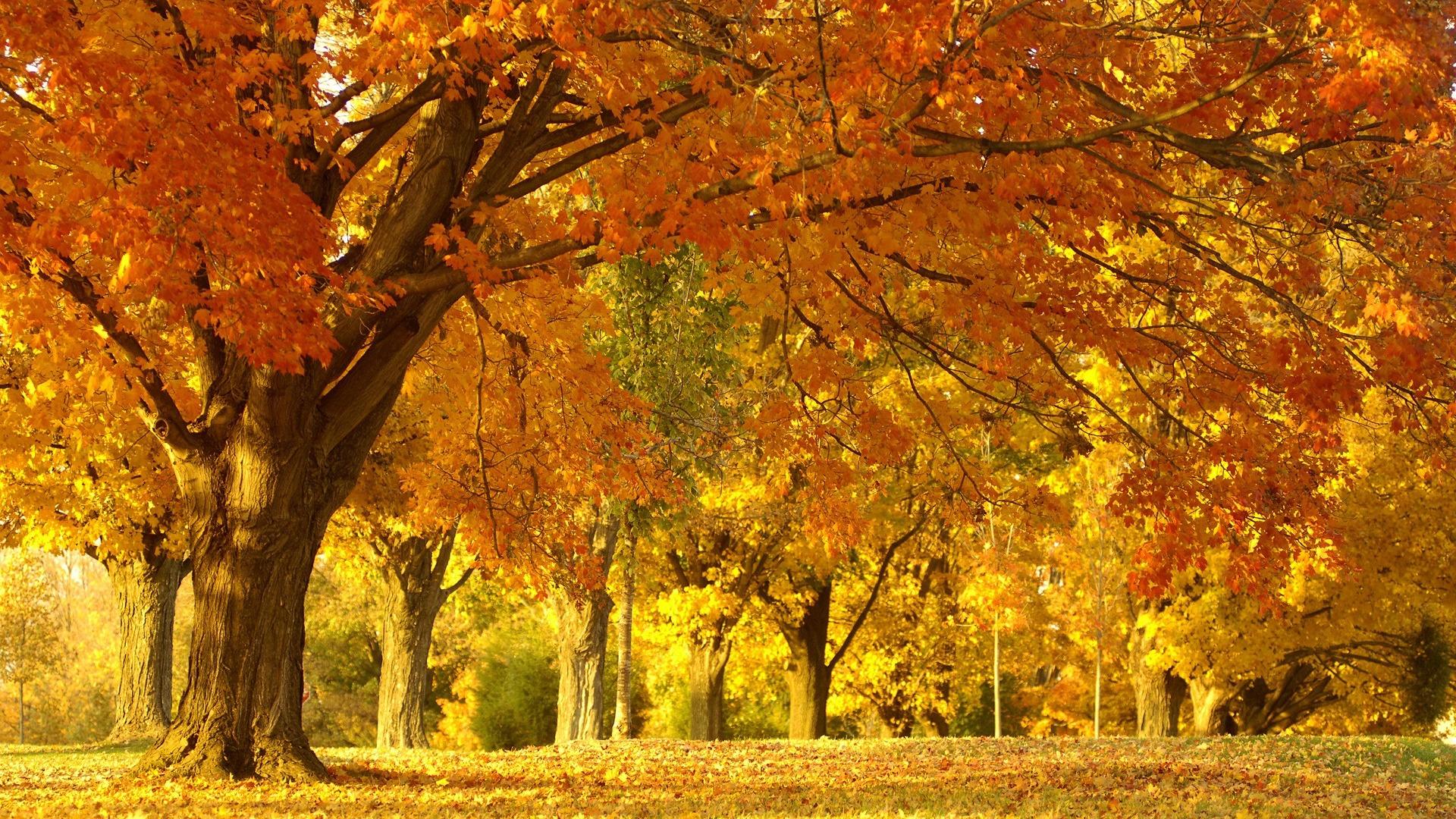 Картинки золотая осень в высоком разрешении