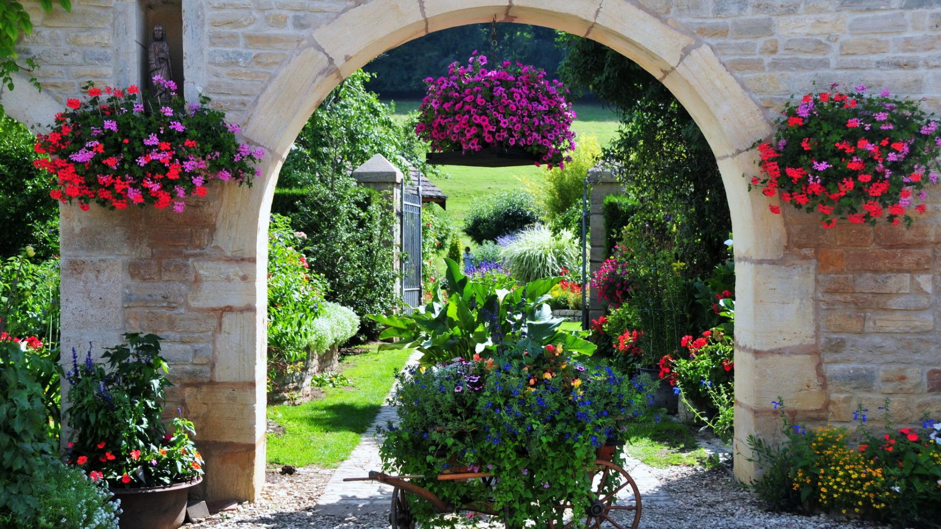 Скачать обои цветы, природа, герань, фото, сад, франция, пет.