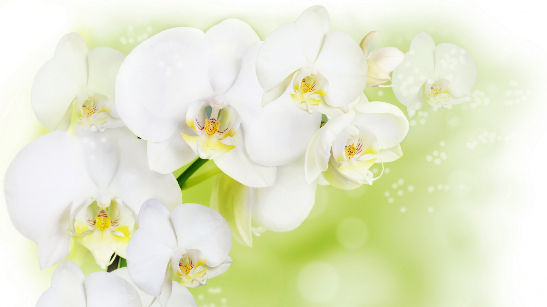 Открытка, открытки с орхидеями для фотошопа