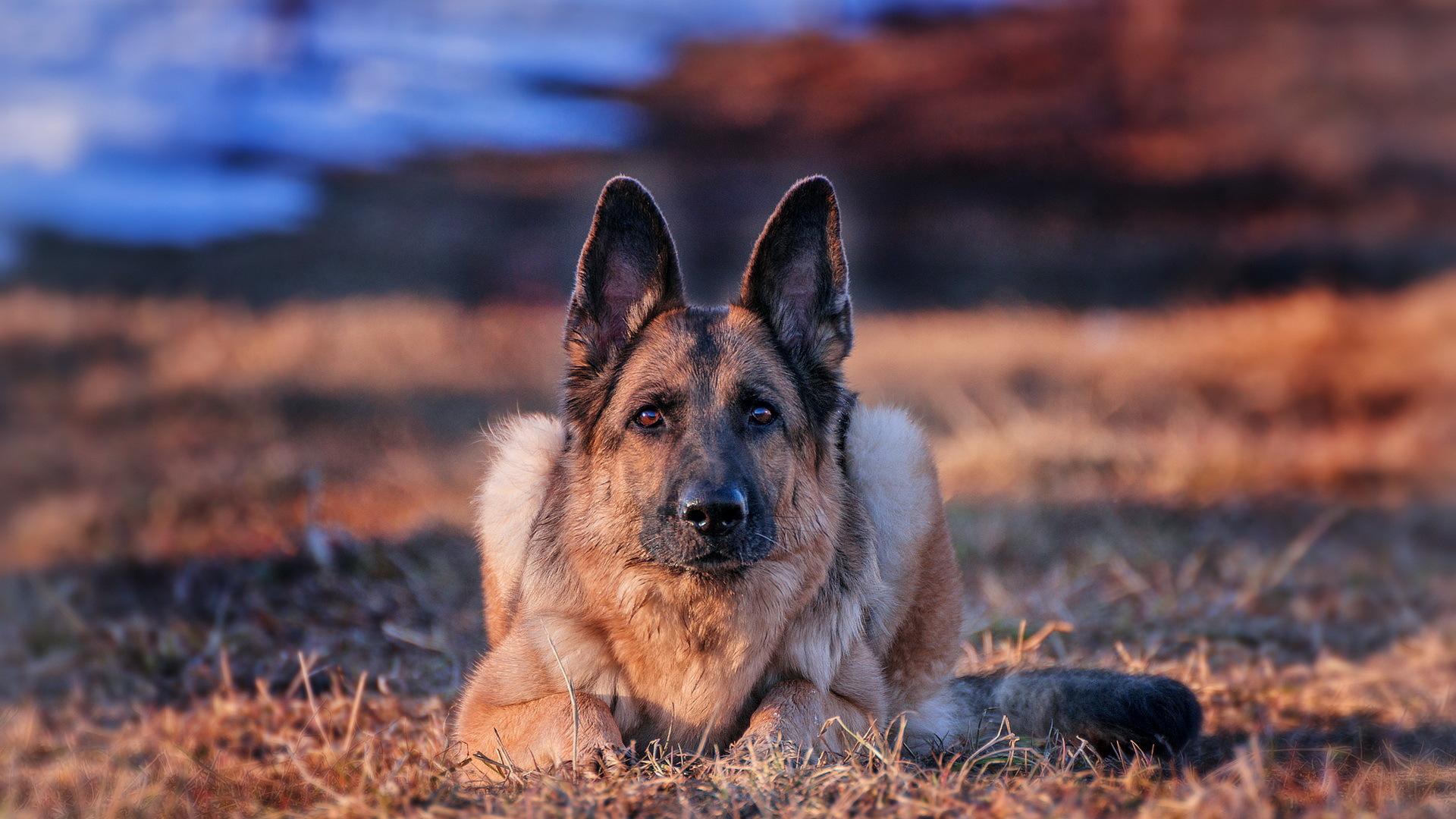 собака взгляд dog view  № 647852  скачать