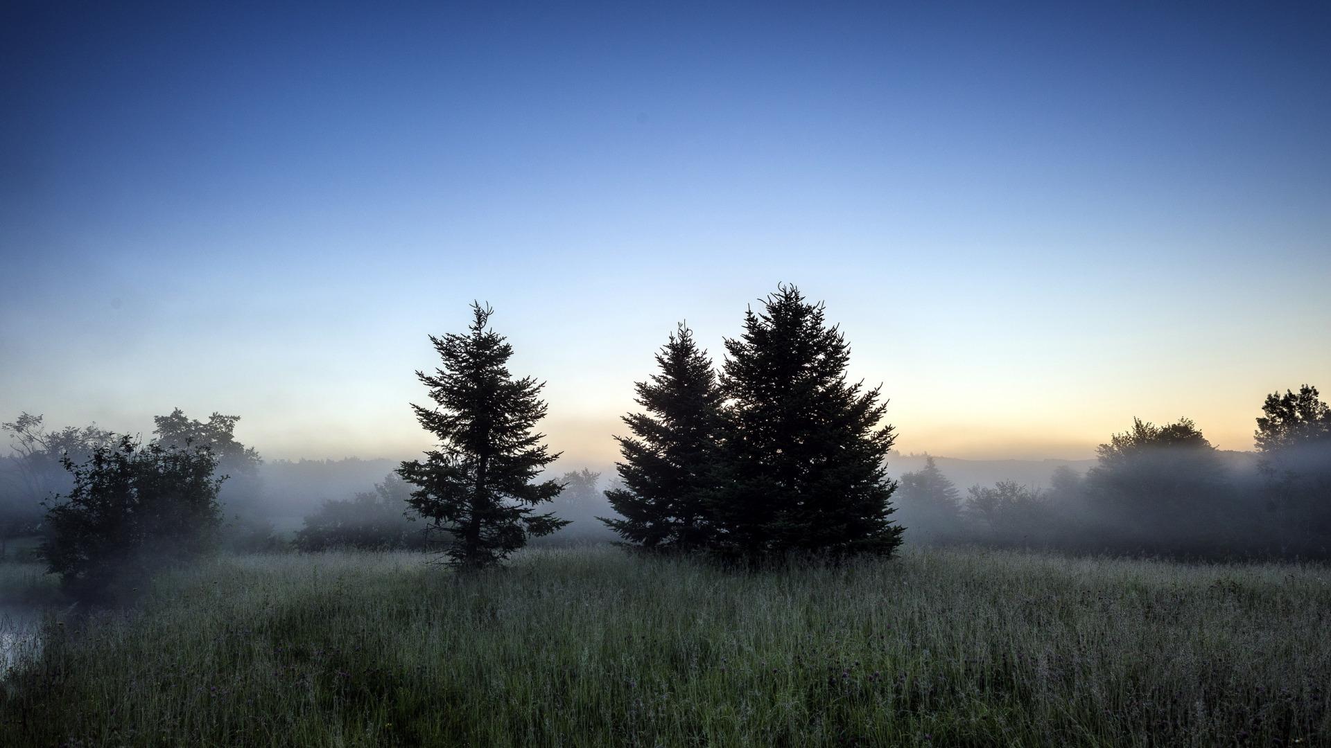 Закат в тумане в лесу  № 1140046 бесплатно