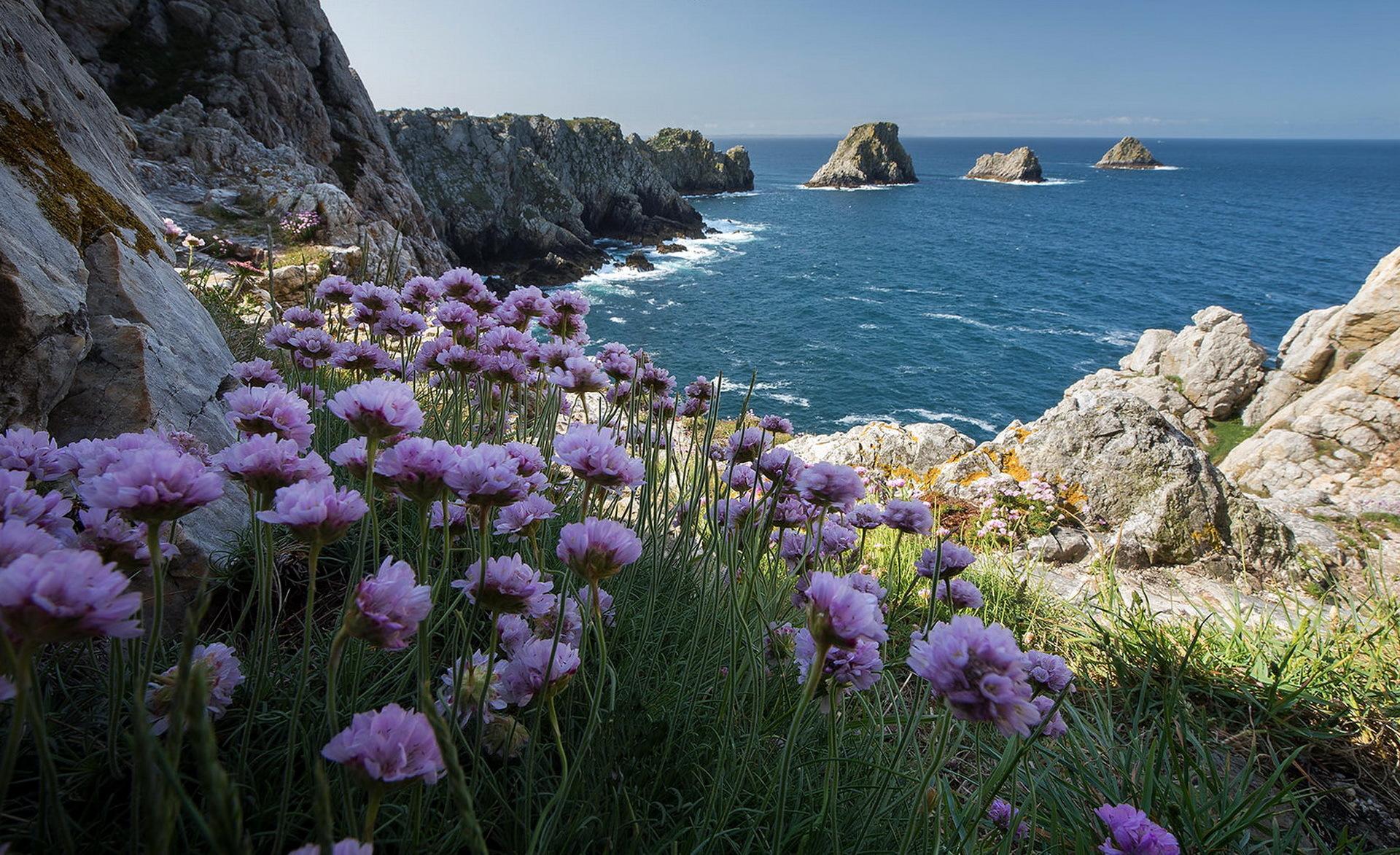 Картинка с морем цветов